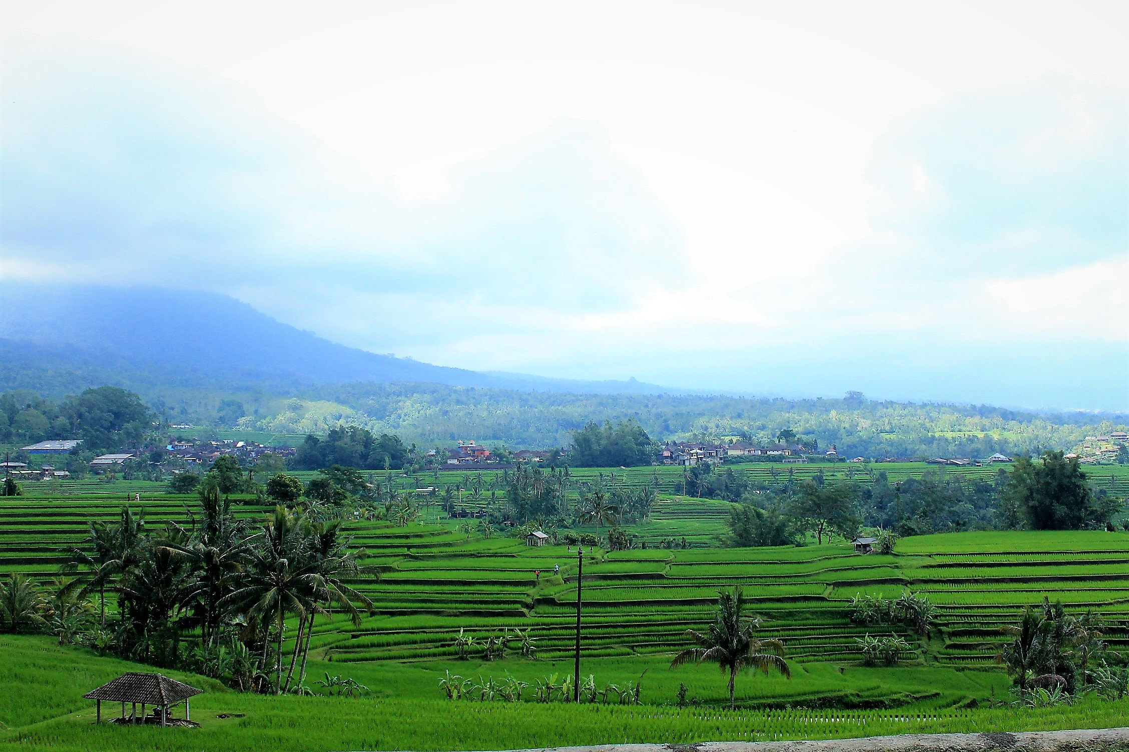 rice-fields-paddies-tegalalang-bali-indonesia