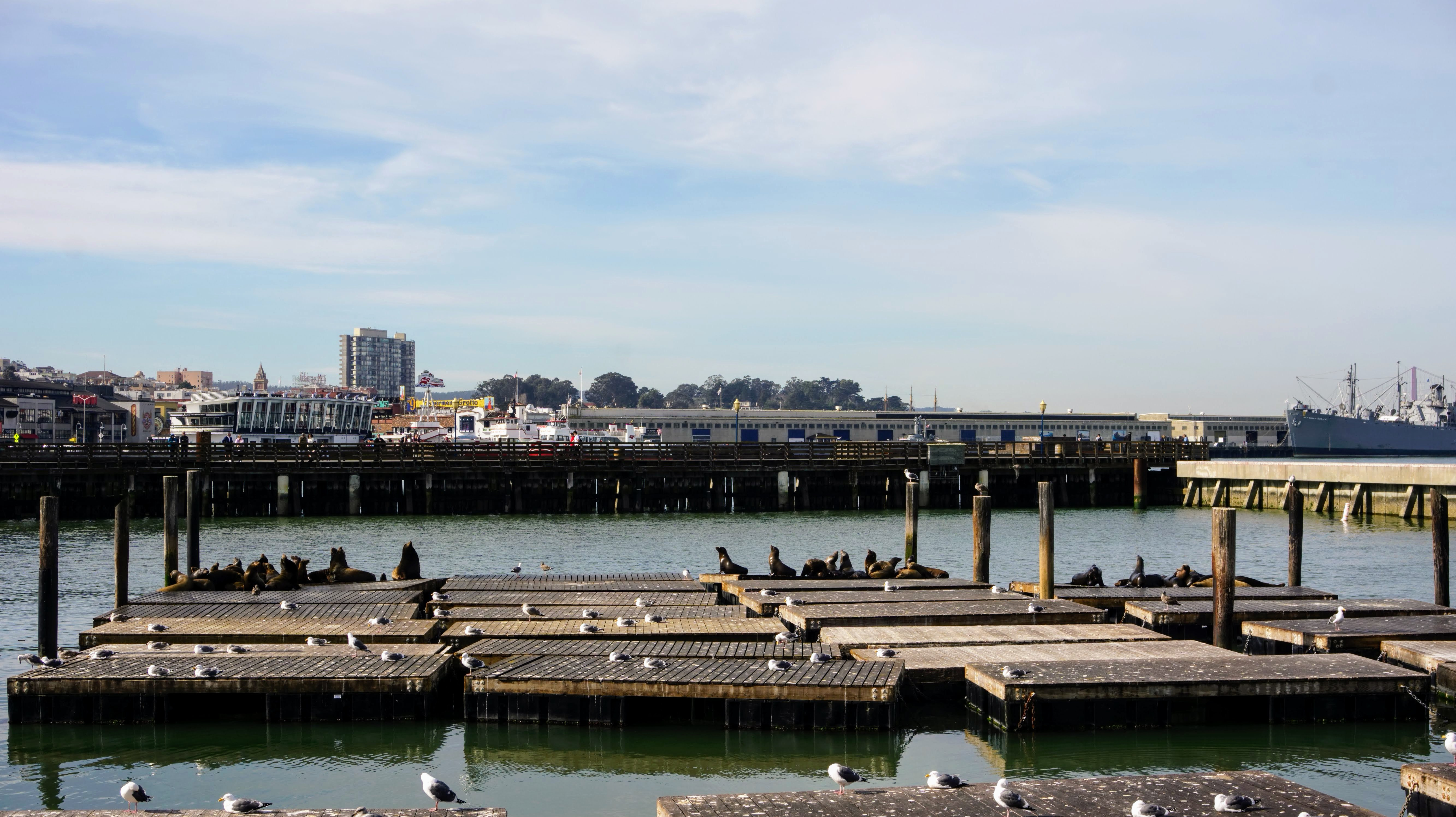 Sea lions resting in the sunshine at Pier 39 in San Francisco California