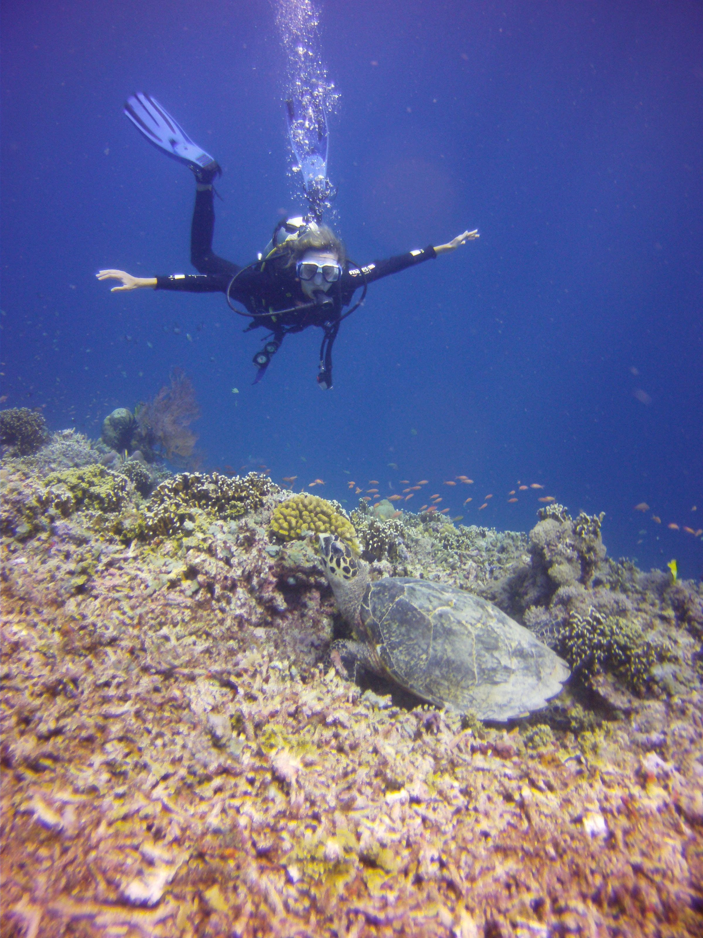 Diving with turtles in Gili Air Island - Indonesia